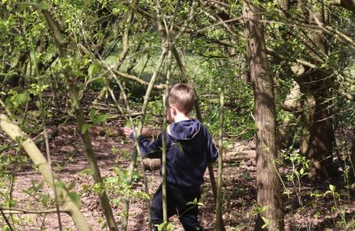 The Lea Forest School trees